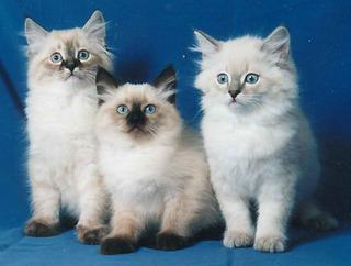 Выставка-продажа котят