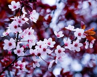 «Весенний хоровод»