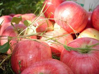 «Яблочные посиделки»