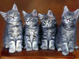 Выставка-продажа кошек