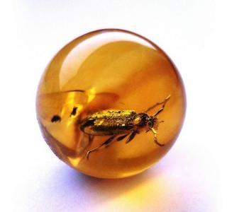 «Доисторические насекомые в янтаре»