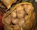 В Уссурийске выявили 4 очага заболеваемости картофеля золотистой нематодой