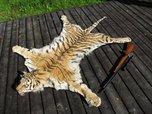 5 лет тюрьмы грозит жителям Уссурийска за продажу шкуры Амурского тигра