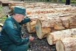 Уссурийская таможня возбудила 33 уголовных дела за незаконный экспорт леса