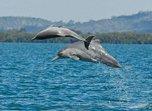 Жители Приморья наблюдали стаю дельфинов в Уссурийском заливе