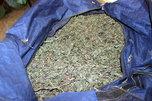 В Уссурийске полицейские изъяли крупную партию наркотиков растительного происхождения