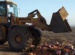 В Уссурийске уничтожены санкционные фрукты из Испании