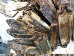 Незаконный вывоз в Китай более 12 тонн шкур ондатры пресекли уссурийские таможенники