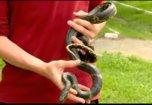 В Уссурийске дети оказались в песочнице c двухметровой змеей