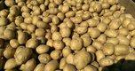 Аграрии Уссурийска увеличили урожайность овощей и картофеля