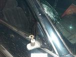 В Уссурийске под колесами автомобиля погиб пешеход