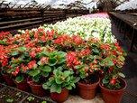 Живое украшение города: более 150 тысяч единиц растений высадили на клумбах Уссурийска