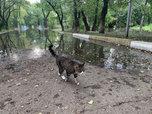 За сутки уровень воды в реках Уссурийска достиг опасного гидрологического явления