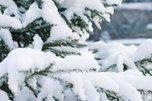 Сильный снег и ветер не покидают Приморье