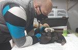 Маленькую медведицу спасли в Приморье