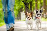 Дог–парк: где в Уссурийске есть место для собак