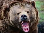 В лесу под Раздольным медведь напал на мужчину
