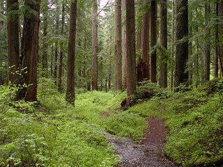 Монашка заблудилась в лесу под Уссурийском