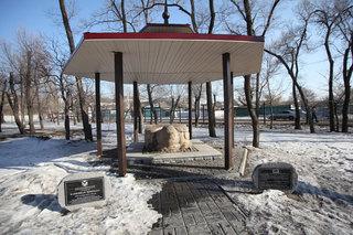 Черепаха эпохи чжурчженей прижилась на новом месте в парке Уссурийска