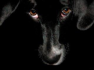 Кто и зачем ворует собак в Уссурийске?