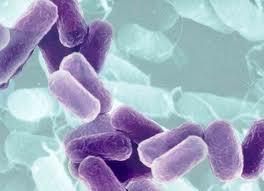 Опасные бактерии найдены в мясе, мясных субпродуктах и красной икре