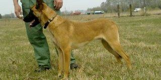 Служебная собака помогла найти квартирного вора в Уссурийске