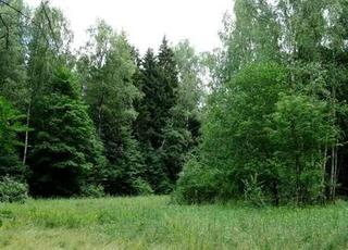 Прокурор обязал администрацию УГО провести лесоустройство