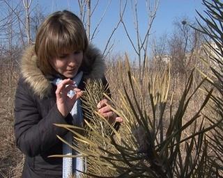 Весной в городе на 50 тысяч деревьев и кустарников станет больше