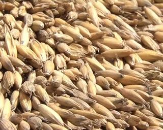 Сельскохозяйственные предприятия приступили к посевной кампании