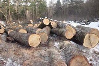 Браконьеры вырубили 150 деревьев на сумму 1 млн рублей под Уссурийском