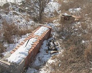 Свалку убитых собак нашел житель Уссурийска недалеко от своего дома