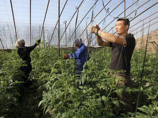 Уссурийский фермер незаконно сдал в аренду сельхозучасток китайским рабочим