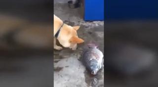 Собака попыталась спасти рыбу