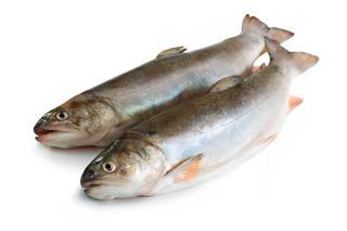 Россельхознадзор арестовал на уссурийской торговой базе более тонны сомнительной рыбопродукции