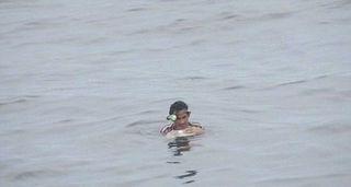 Рыбак двое суток провел в холодной воде на куске пенопласта