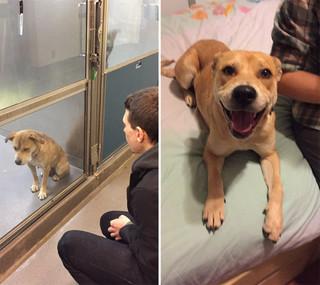 Всего один день: приютские собаки до и после обретения семьи