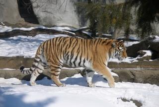 Местный житель Уссурийска осужден за незаконный оборот частей особо ценных диких животных