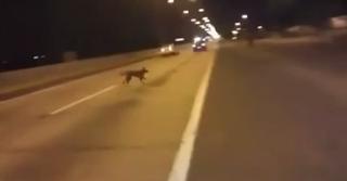 Пользователи YouTube спорят по поводу ролика с телепортирующейся собакой