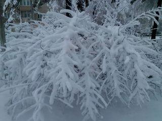 Погода преподнесла очередные сюрпризы коммунальщикам Уссурийска