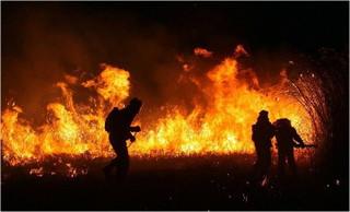 В Приморье действующих лесных пожаров нет