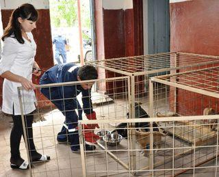 Уссурийск одним из первых городов в крае приступил к решению проблемы безнадзорных животных
