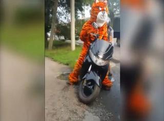В Уссурийске оштрафовали тигра на мотоцикле