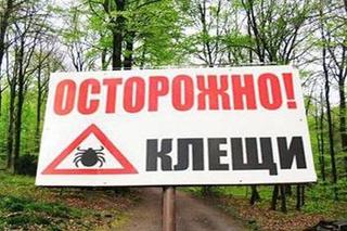 Уссурийск один из самых опасных районов в крае по активности клещей