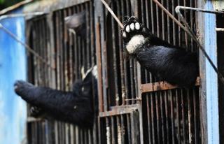О судьбе медведей, спасенных из затопленного зоопарка в Уссурийске, снимут фильм