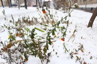 Самую холодную зиму за 5 лет обещает Росгидромет