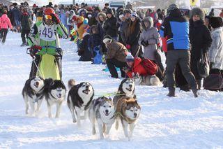 Соревнования по езде на собачьих упряжках пройдут под Уссурийском