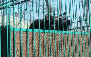 Для школьников Уссурийска уроки биологии будут проходить в городском парке, где находится зооэкспозиция