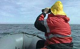 Коммерсанты из Уссурийска и КНР ответят в суде за контрабанду морского гребешка
