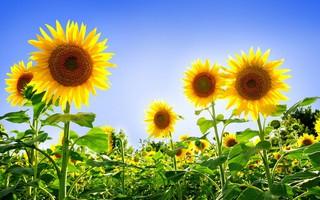 Погода в июле в Уссурийске будет переменчива