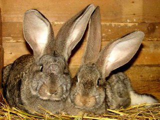 В  селе под Уссурийском сосед украл домашних кроликов у пенсионерки